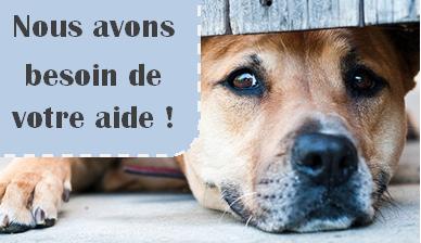 Aidez la S.P.A. de Colmar à financer son futur cabinet vétérinaire !